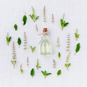 Plantes de la boutique Dorconfort
